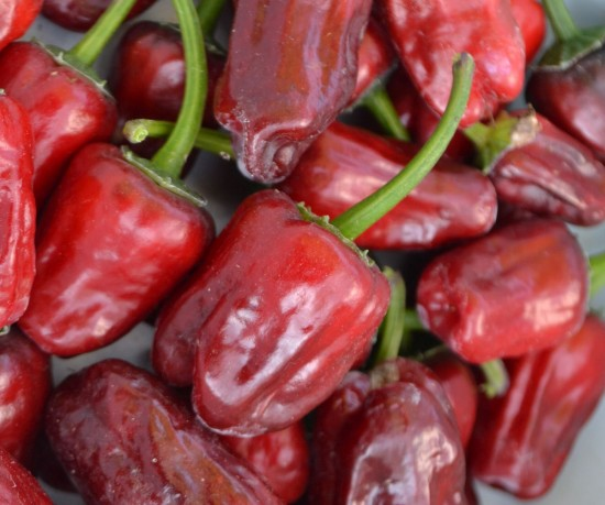 Jamaican Red Hot