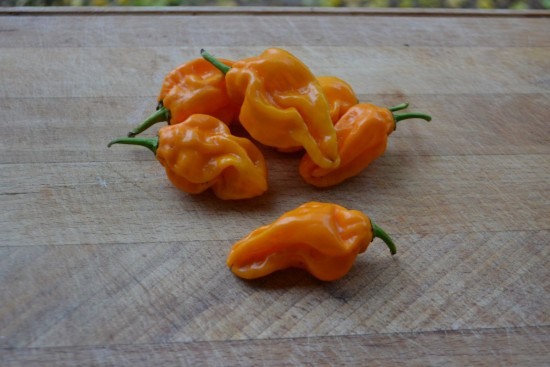 Habanero Yellow